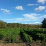Vendor Spotlight: Simington Gardens