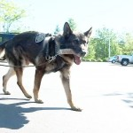 Cool News for Beaverton K9 Officers: From KPTV