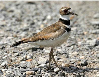 Beaverton Bird Watch: Nom De Plume
