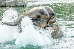 Zoo News is Good News: National Awards For Excellence, Zoo Wins …Again!